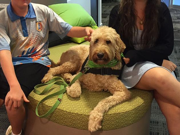 Therapy Dog v Service Dog